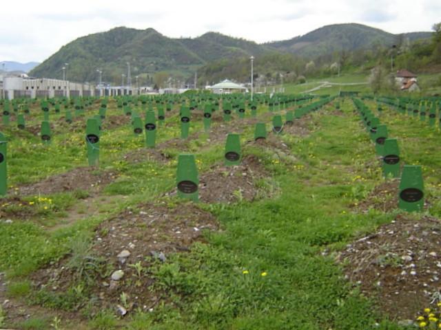 Srebrenica_Potocari_Memorial_2.JPG